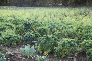 The Kale Project_Acupuncture