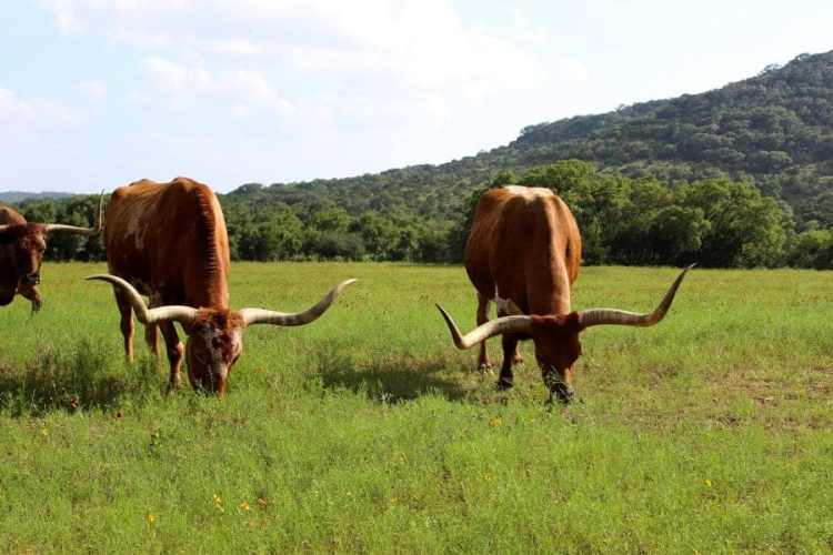 The Great Southern USA Roadtrip – Texas