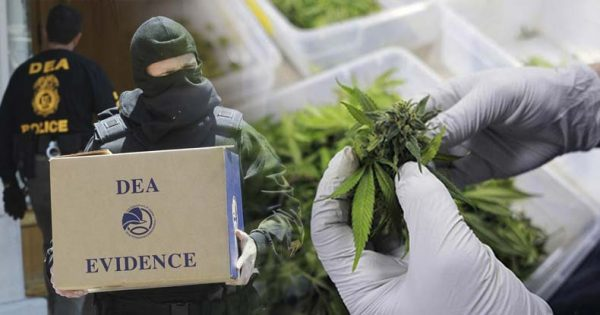 Report Shows DEA Deliberately Blocked Beneficial Science to Perpetuate War on Cannabis