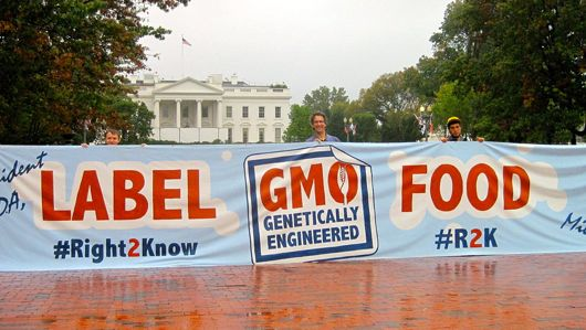 label gmo large