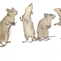 Pamela Marie Pierce - Five Rats Consider Their Angst