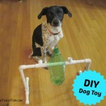 DIY Dog Treat Dispenser and Toy