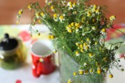 Fresh chamomile flowers, or manzanilla as it's known in Spanish