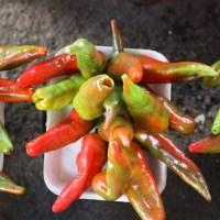 Oaxaca chile de agua