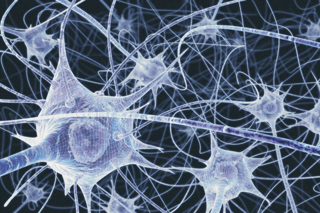 What Combat Leaders Need to Know About Neuroscience