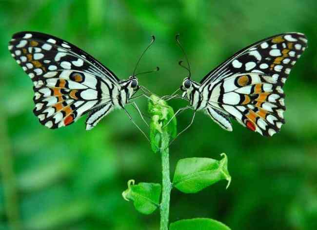 Two butterflies on plant