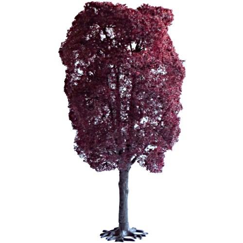 Medium Crop Of Copper Beech Tree