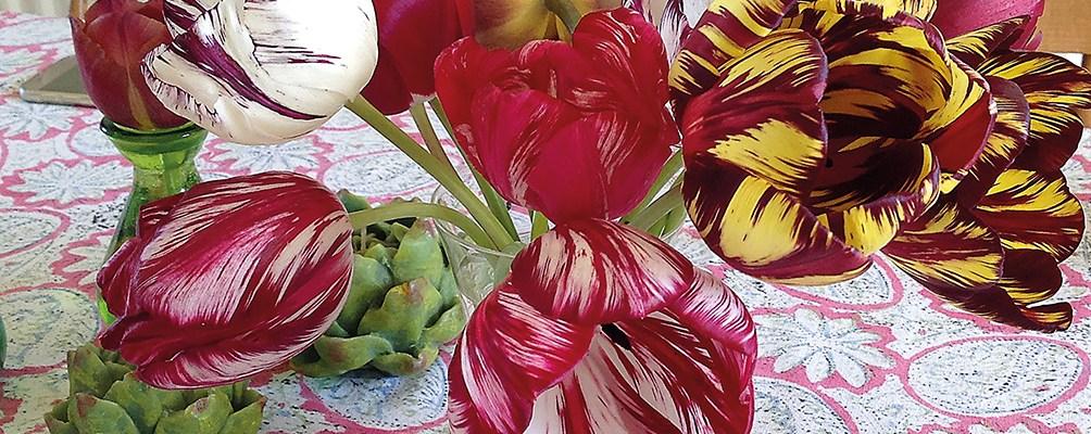 natashas-tulips