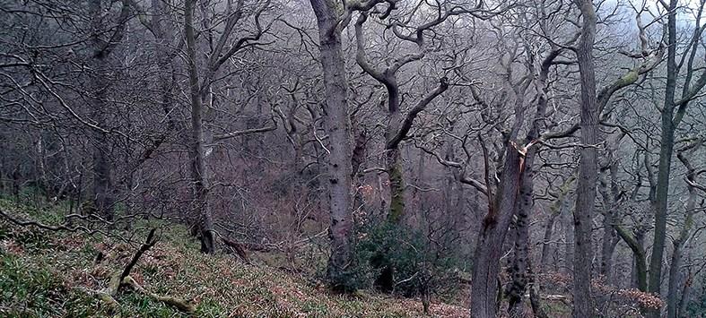 monk wood oaks
