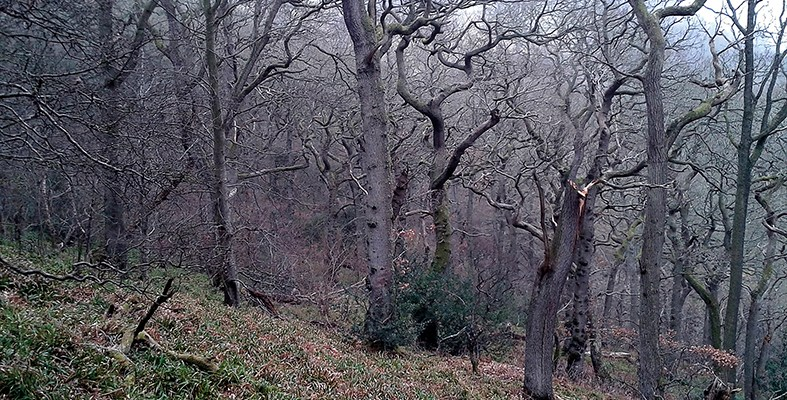 monk wood oaks