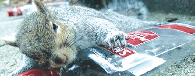 drunksquirrel