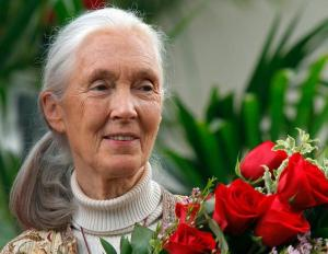 Jane Goodall expresses her belief in Bigfoot Sasquatch Yeti