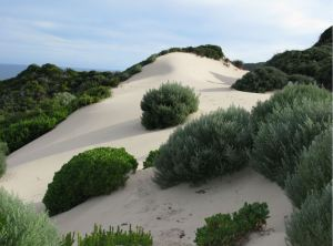 The Dune that indicated we didn't have far to go.  Note the long shadows on the bushes...today was a very long day