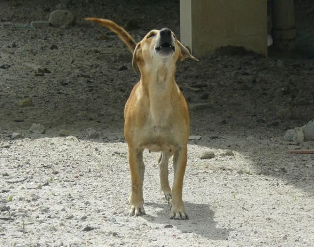 fishdog 2