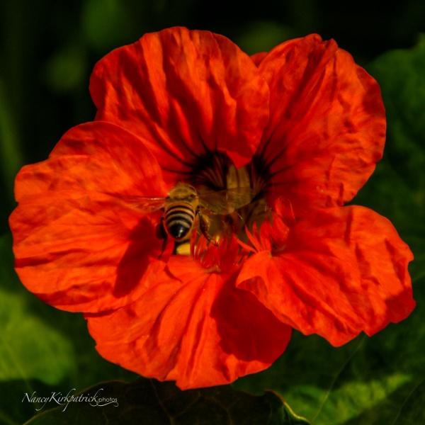 FLOWER FIELDS 2007 013