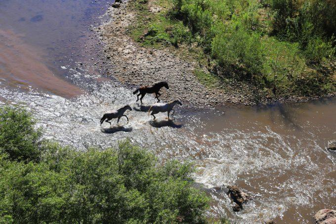 Wild horses, Rio Verde, AZ