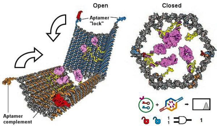 3_DNA nanobots