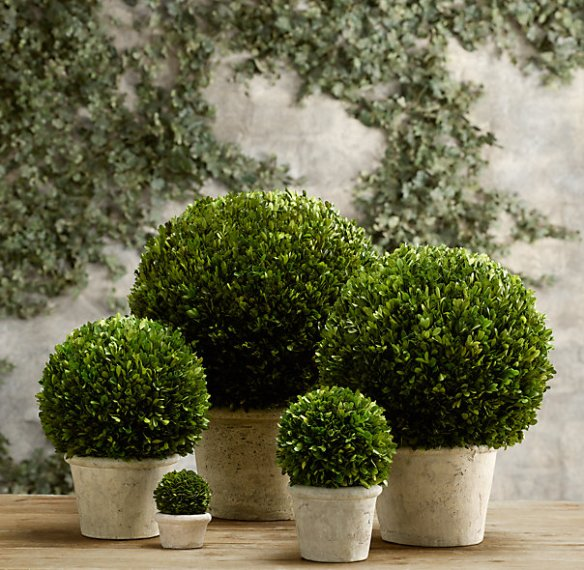 Restoration Hardware Potted Boxwoods