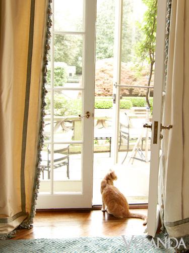 Daniel Rollins Boxwood Door View with cat