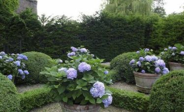 Potted Hydrangeas via The Fuller View
