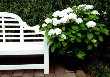 White Hydranges by a white bench via Pinterest