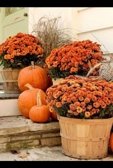 Potted Mums via pinterest