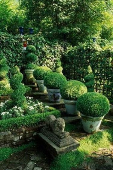 Boxwoods via Acquired Objects