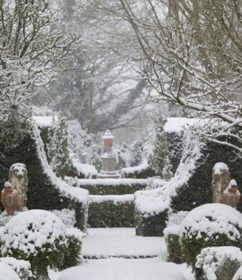 Snow covered garden