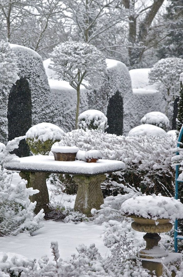 Snowy topiary the potted boxwood - Gardening mistakes maintaining garden winter ...