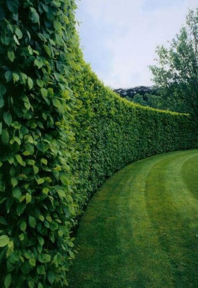 Boxwood-Hedges-via-M-Pression