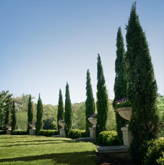 Hulsey Garden 12