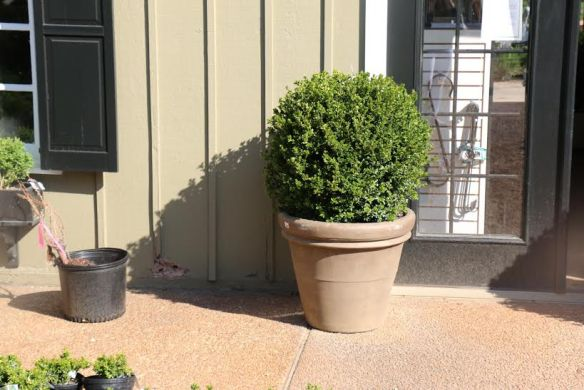Historic Garden Week_The Potted Boxwood 50