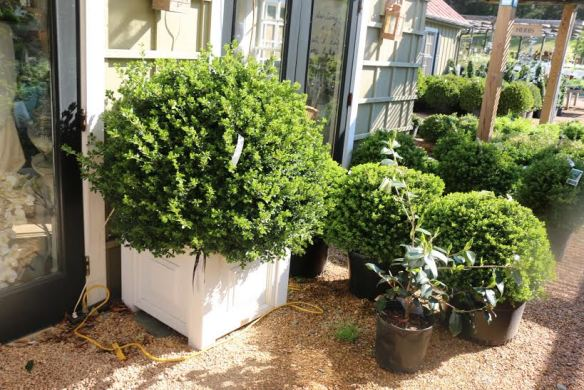 Historic Garden Week_The Potted Boxwood 51