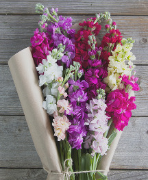 Bouqs flowers for mothers day
