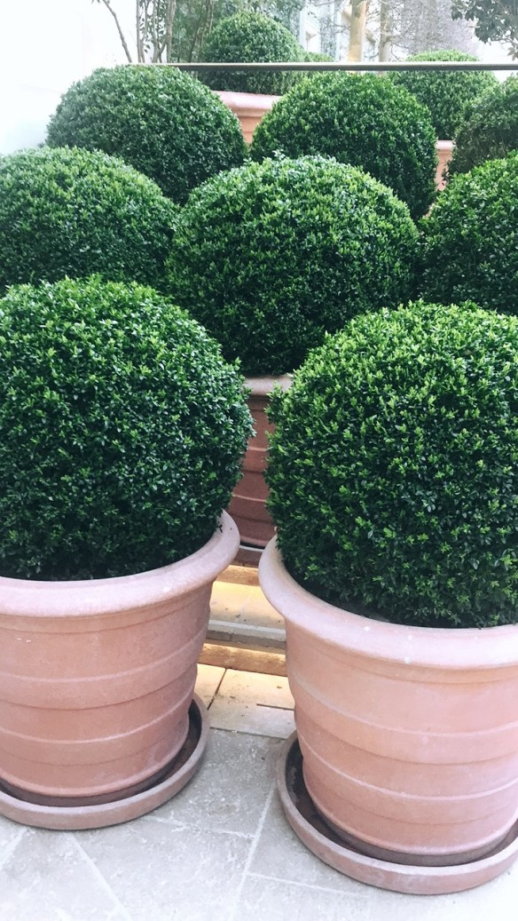 Boxwood at The Ritz Paris