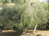 TT_Tree_Bush_Example