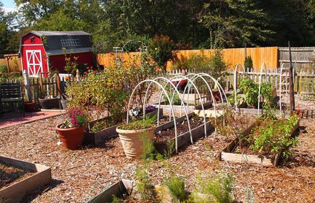 Vegetable Garden Planning For Beginners The Prepper Journal