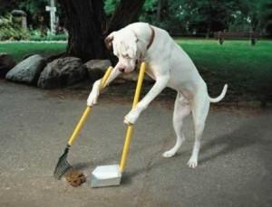 dog-training1-300x229