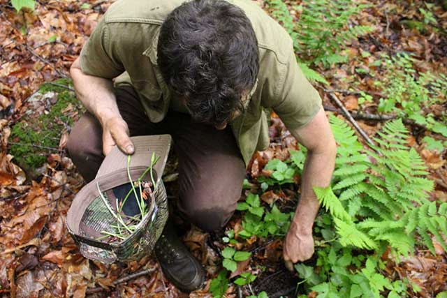 Foraging for food could prove harder in the winter.
