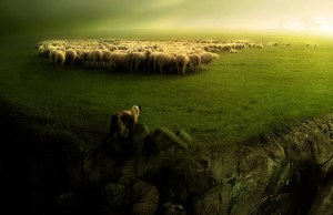 SheepdogConcept