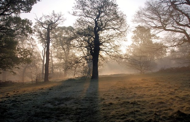 misty-364498_640