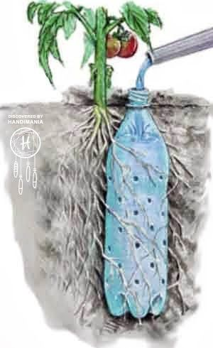 olla-drip irrigators - easiest way to do it - plantcaretoday_com