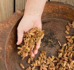 seed-saving-winnowing.jpg.rend.hgtvcom.1280.960