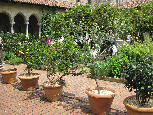 Planning Your Homestead Orchard: Benefits of Dwarf Trees
