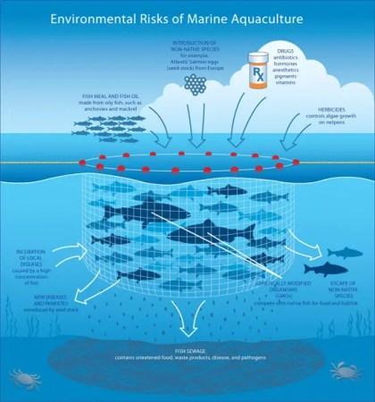 Risks_aquaculture_550