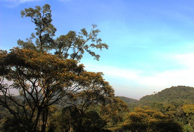 Nyungwe Rainforest trees Rwanda - image zoedawes