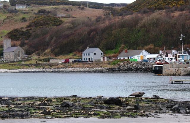 Rathlin Island Harbour seals NI - zoedawes