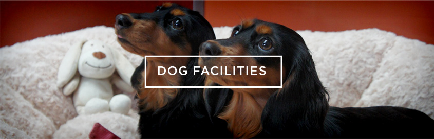 dog-facilities