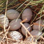 Spring Poultry Primer