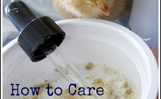How to Care for a Sick Chick